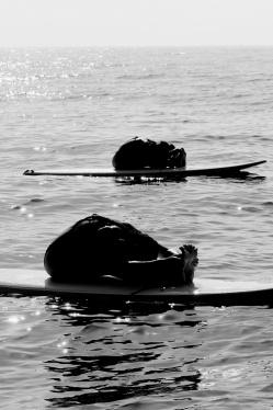 Paddle Yoga Day 217